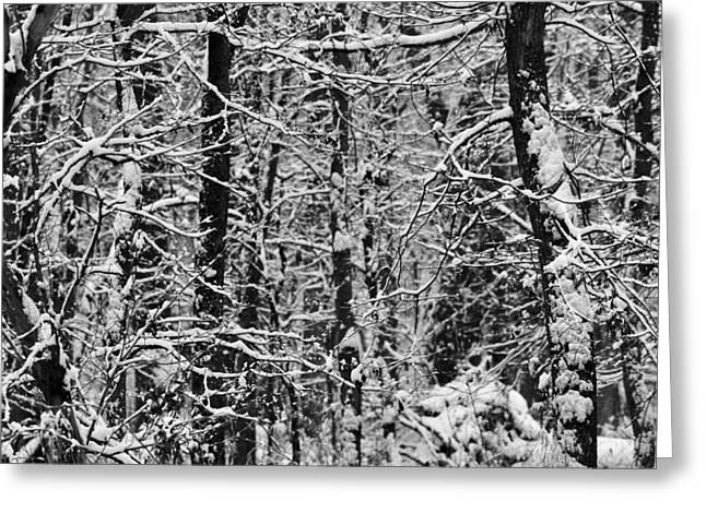 Trees In Winter Greeting Cards - Monochrome Winter Wilderness Greeting Card by Dan Sproul