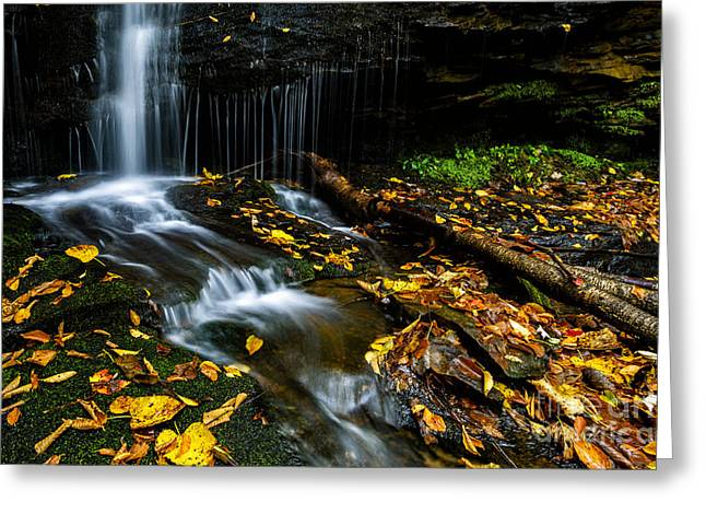 Fallen Leaf Greeting Cards - Monongahela Forest Waterfall Greeting Card by Thomas R Fletcher