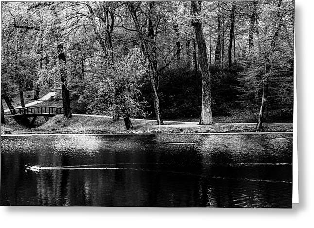 Pond In Park Greeting Cards - Monopark Greeting Card by Yevgeni Kacnelson