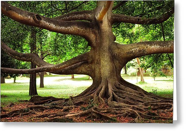 Tree Roots Photographs Greeting Cards - Monster Tree. Old Fig Tree in Peradeniya Garden. Sri Lanka Greeting Card by Jenny Rainbow