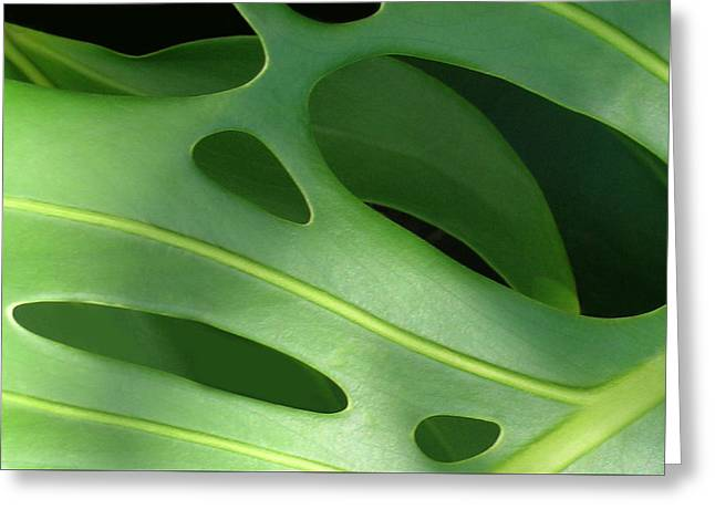 Swiss Cheese Greeting Cards - Monstera Greeting Card by James Temple