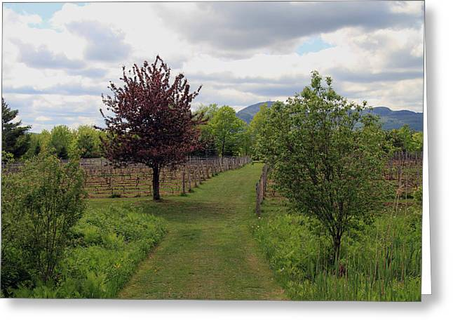 Wine Tour Greeting Cards - Mont Orford Vineyard Greeting Card by Helen  Bobis