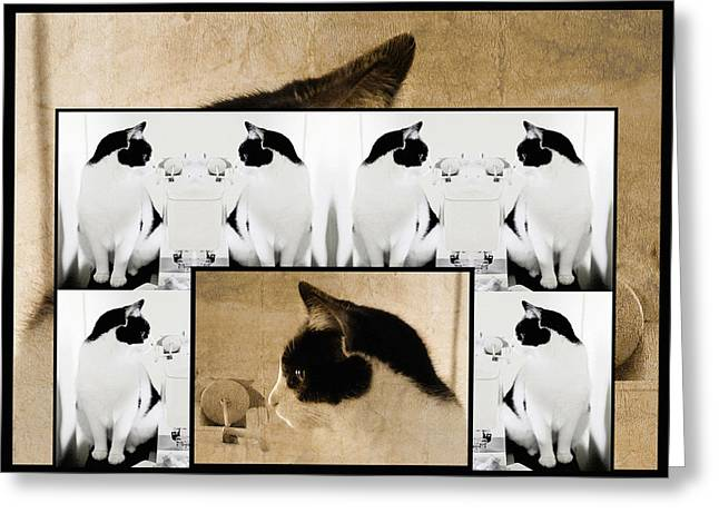 Photos Of Cats Digital Greeting Cards - Montage of a Pet Cat Greeting Card by Constance Lowery