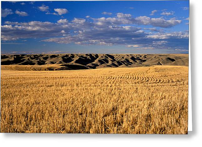The Great Outdoors Greeting Cards - Montana   Field And Hills Greeting Card by Anonymous