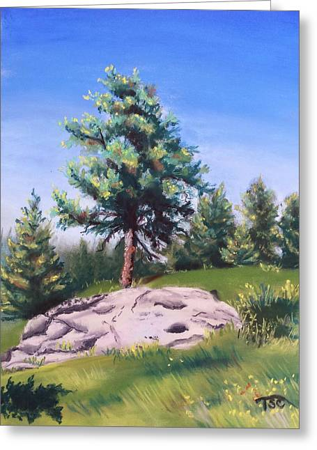 Fir Trees Pastels Greeting Cards - Montana Fir Greeting Card by Tammy Crawford