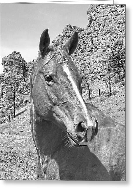 Montana Horse Portrait In Black And White Greeting Card by Jennie Marie Schell