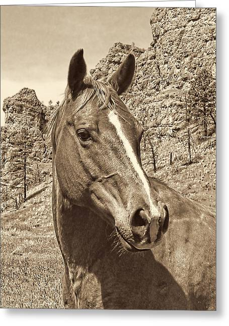 Protrait Greeting Cards - Montana Horse Portrait in Sepia Greeting Card by Jennie Marie Schell