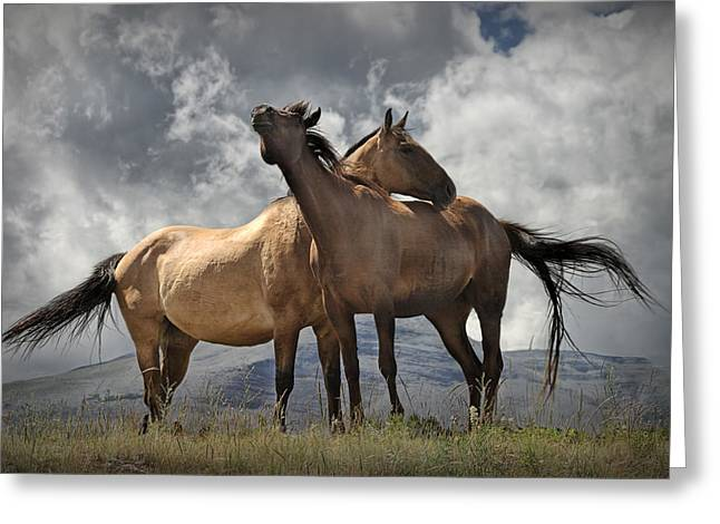 Hooved Mammal Greeting Cards - Montana Horses Greeting Card by Randall Nyhof
