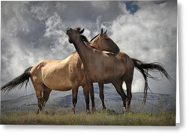 Randy Greeting Cards - Montana Horses Greeting Card by Randall Nyhof