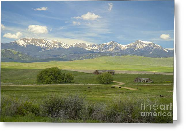 Snow Capped Greeting Cards - Montana Life Greeting Card by Idaho Scenic Images Linda Lantzy