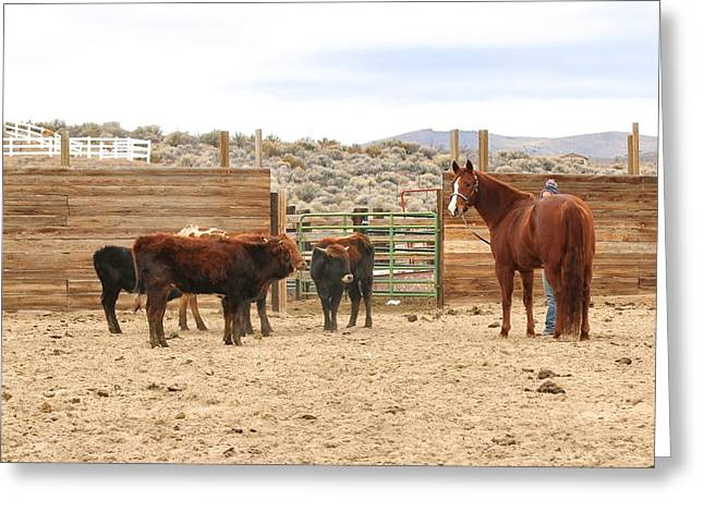 Horses On Sale Greeting Cards - Montanas Lil Peppy Greeting Card by Maria Jansson