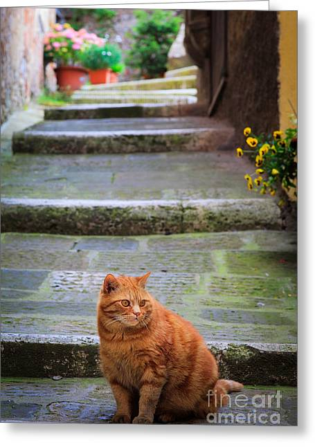 Montepulciano Greeting Cards - Montepulciano Cat Greeting Card by Inge Johnsson