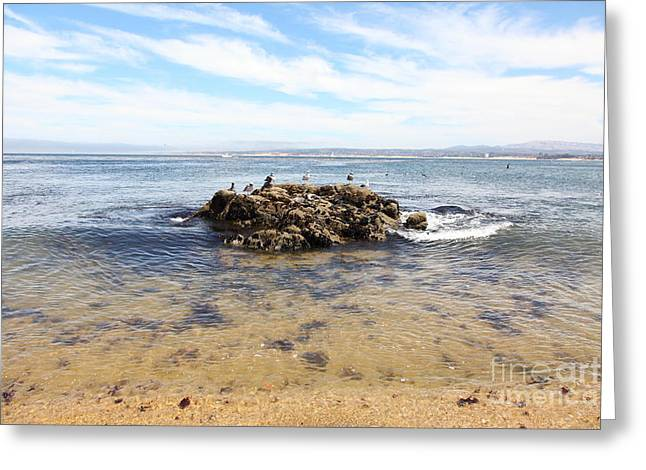 Bird Scape Greeting Cards - Monterey Bay California 5D25055 Greeting Card by Wingsdomain Art and Photography