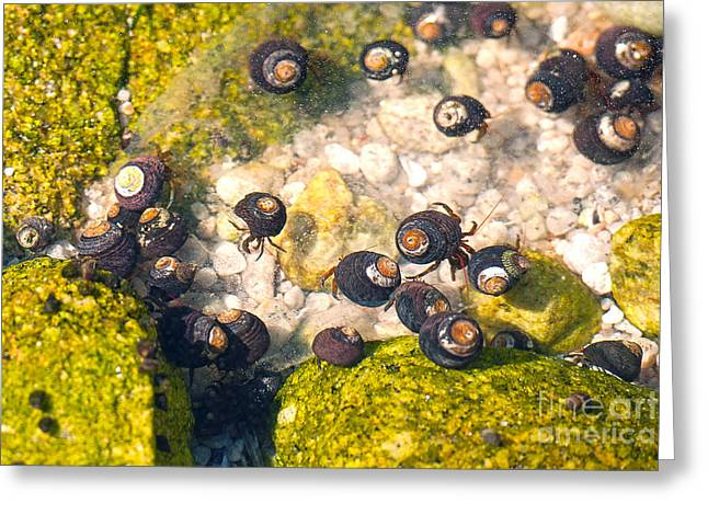 Monterey Bay Tide Pools Greeting Card by Artist and Photographer Laura Wrede