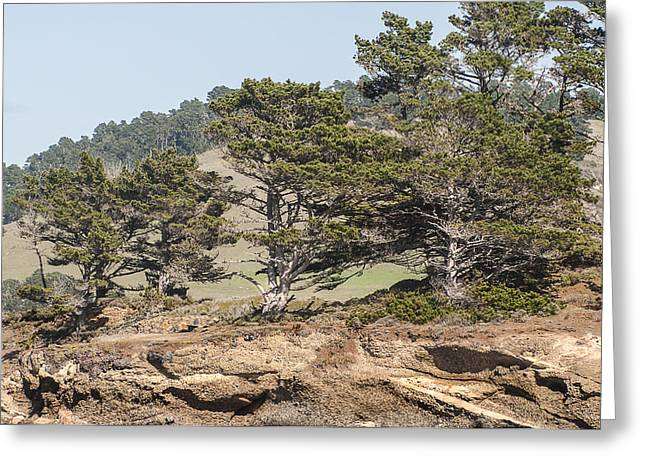 Point Lobos State Greeting Cards - Monterey Cypress Trees Greeting Card by Lee Kirchhevel