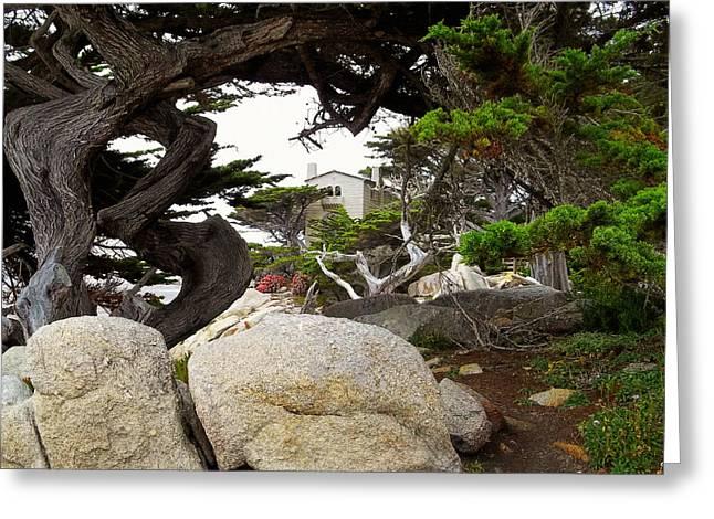 Scenes Of Pebble Beach Greeting Cards - Monterey Peninsula - 17 Mile Drive Greeting Card by Glenn McCarthy