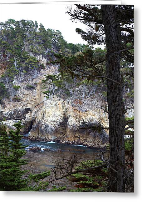 Point Lobos Greeting Cards - Monterey Rock Pines and Cypress Greeting Card by Viktor Savchenko