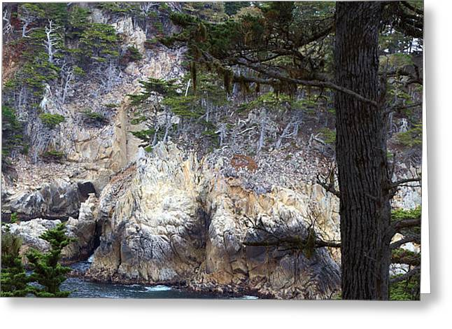 Monterey Rock Pines and Cypress Greeting Card by Viktor Savchenko