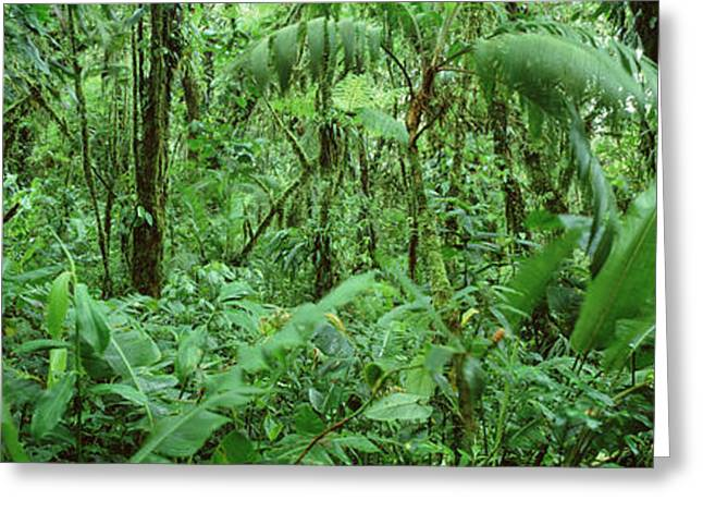 Reserve Greeting Cards - Monteverde Cloud Forest Reserve, Costa Greeting Card by Panoramic Images