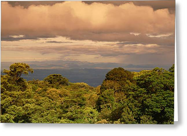 Monteverde Puntarenas Province Costa Greeting Card by Panoramic Images