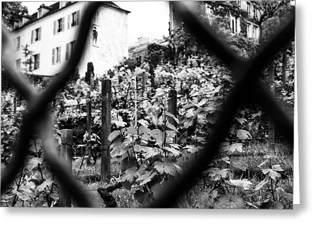 Winery Photography Greeting Cards - Montmartre Vineyard Greeting Card by Nomad Art And  Design