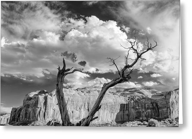 Black Mesa Greeting Cards - Monument Valley Juniper Tree and Mesa Greeting Card by Silvio Ligutti