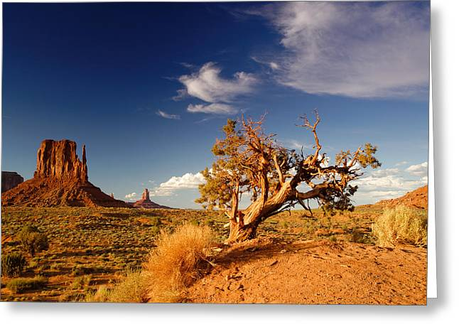 White Mittens Greeting Cards - Monument Valley Lone Juniper and West Mitten. Greeting Card by Silvio Ligutti