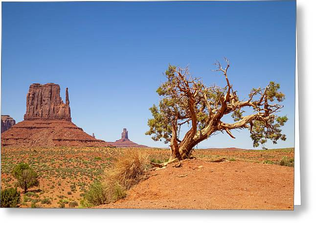 Layer Greeting Cards - MONUMENT VALLEY West Mitten Butte and Tree Greeting Card by Melanie Viola