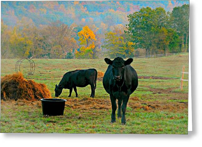 Autumn In The Country Greeting Cards - Moo Greeting Card by Diana Angstadt
