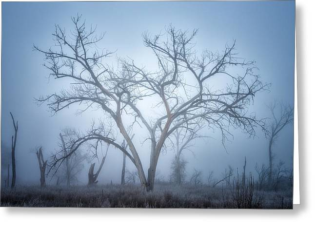 Dead Tree Greeting Cards - Moods of the Morning Greeting Card by Darren  White