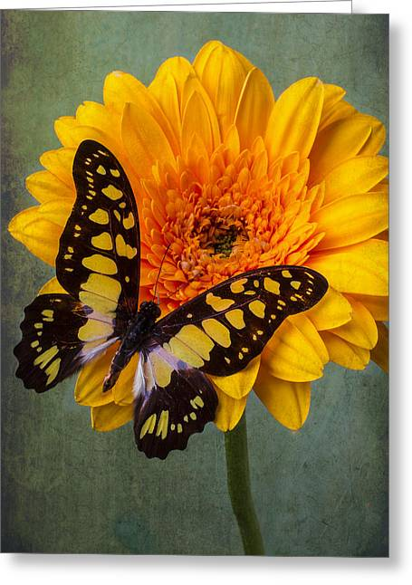 Gerbera Daisy Greeting Cards - Moody Butterfly Greeting Card by Garry Gay