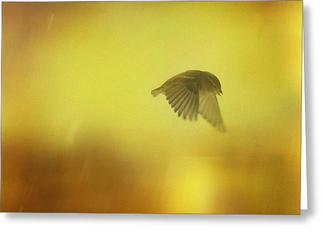 Avian Art Greeting Cards - Moody Flight Greeting Card by Gothicolors Donna Snyder
