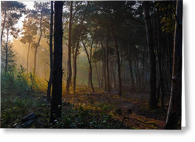 Esque Greeting Cards - Moody Forest Happy Sun Greeting Card by Semmick Photo