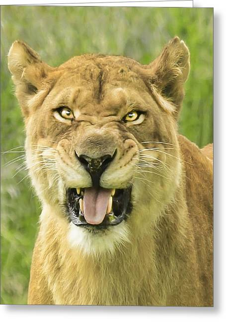 Lioness Greeting Cards - Moody Lion Greeting Card by Roy  McPeak
