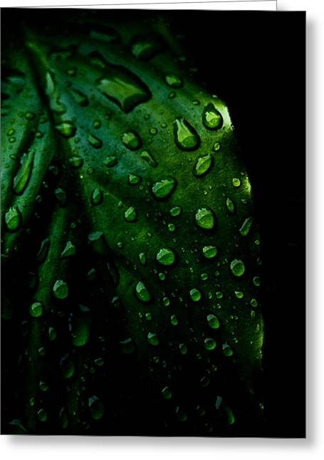 Water Drops Photographs Greeting Cards - Moody Raindrops Greeting Card by Parker Cunningham