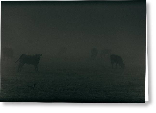 Moo Moo Greeting Cards - Mooing in the mist Greeting Card by Chris Fletcher