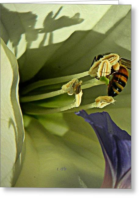 Pollinator Greeting Cards - Moon and Morning Greeting Card by Chris Berry