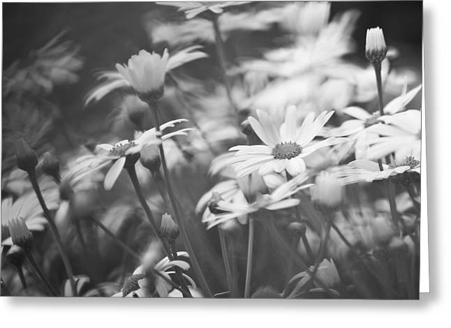 Square_format Greeting Cards - Moon Daysie Field BW Greeting Card by Heiko Koehrer-Wagner