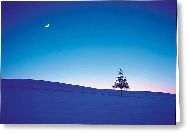 Backlit Greeting Cards - Moon In Sky And Single Tree Greeting Card by Panoramic Images