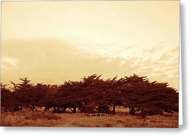 Cambria Greeting Cards - Moon Over Cypress Grove Greeting Card by Lorraine Devon Wilke