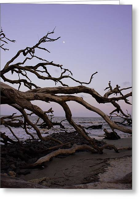 Sea Moon Full Moon Greeting Cards - Moon over Jekyll Greeting Card by Laurie Perry