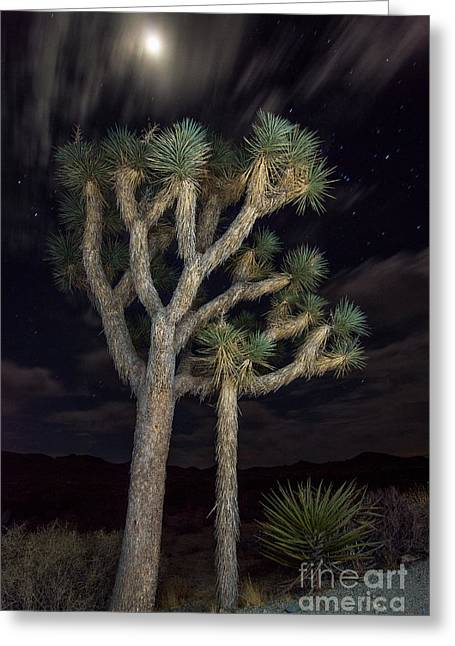 Moonrise Greeting Cards - Moon over Joshua - Joshua Tree National Park in California Greeting Card by Jamie Pham