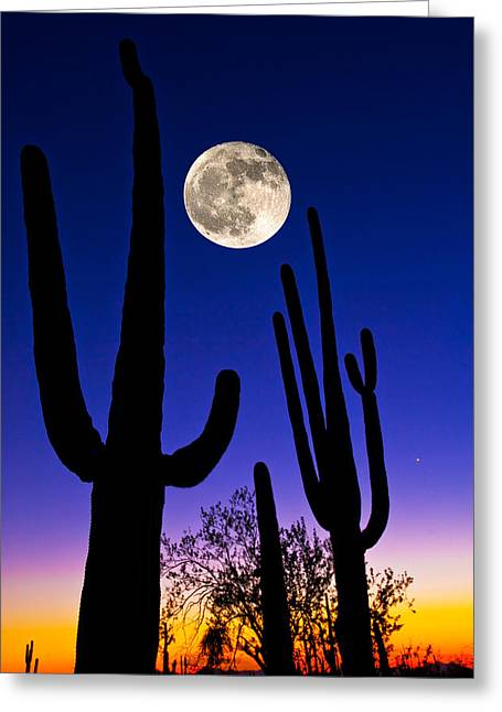 Saguaro Cactus Greeting Cards - Moon Over Saguaro Cactus Carnegiea Greeting Card by Panoramic Images