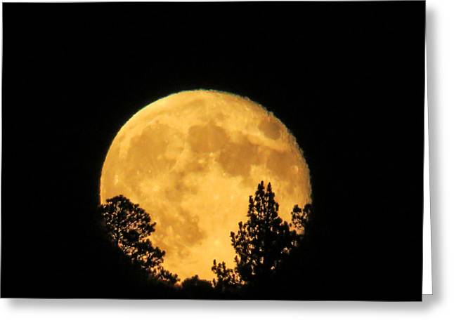 Selenic Greeting Cards - Moon Rise over Pines Greeting Card by Dawn Key