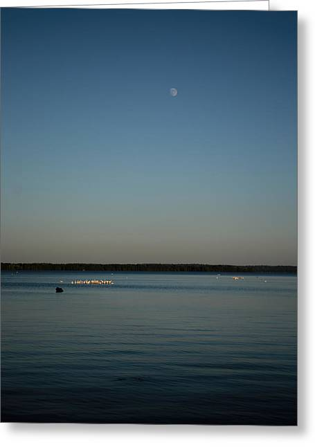 Peaceful Tree At Sunset Greeting Cards - Moon Rising Over Reelfoot Greeting Card by Jai Johnson
