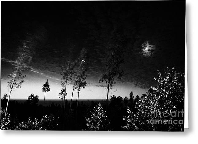Moonrise Greeting Cards - Moon Rising Over The Pacific And Eucalypus Forest After Sunset Los Pellines Chile Greeting Card by Joe Fox