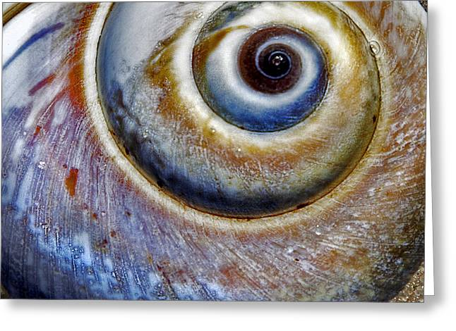 Moon Beach Greeting Cards - Moon Snail 2 Greeting Card by Charles Harden