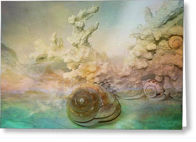 Dark Blue Greeting Cards - Moon Snail Greeting Card by Shirley Sirois