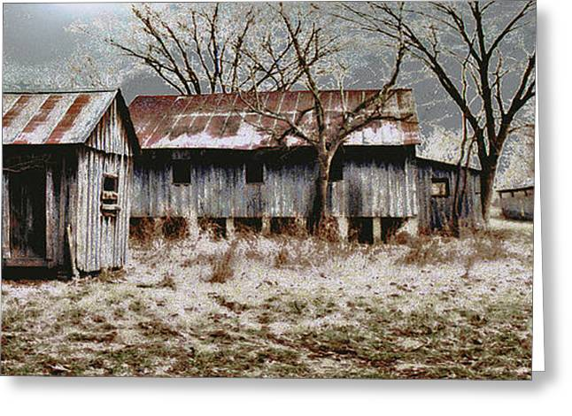 Tin Roof Greeting Cards - Far from the Madding Crowd Greeting Card by David Walker