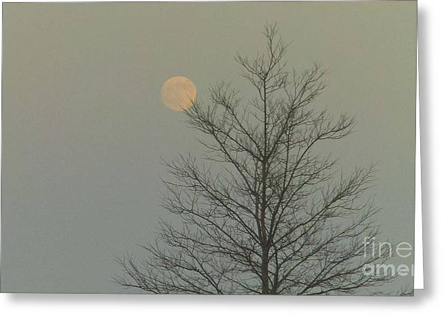 Feile Case Greeting Cards - Moon Tree Fall Haze 12 10 2011 Greeting Card by Feile Case